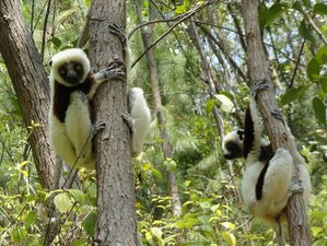 7 Days Budget Safari in Madagascar