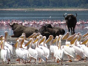 4 Days Maasai Mara - Lake Nakuru Group Joining Tour Safari, Kenya
