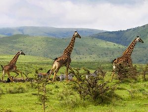 3 Days Tarangire National Park, Ngorongoro Crater, and Lake Manyara National Park Safari in Tanzania