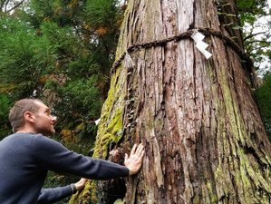 3 Day Forest Bathing Weekend with Christopher Lecoq in an Ecological Domaine du Taillé, Vesseaux
