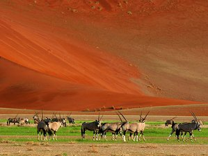 7 Days Exhilarating Safari in Southern Namibia