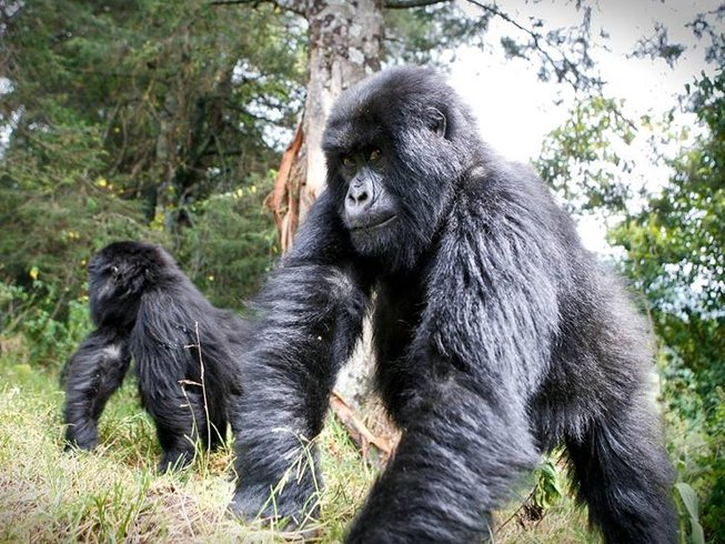 10 Days Wildlife and Gorilla Safari in Uganda