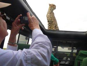 8 Days Migration Footsteps Safari Tour in Tanzania