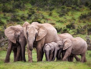 11 Day Safari Tour from Chebera Churchura National Park to Bale Mountains, Ethiopia