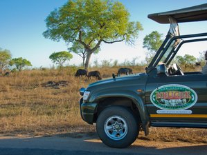 3 Days Self Drive Safari in Kruger National Park, South Africa