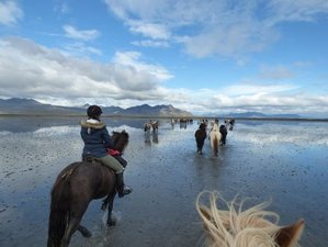 4 Day Riding and The Northern Lights Horseback Riding Holiday in Selfoss, Árborg