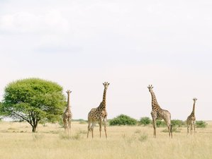 4 Days Exciting Wildlife Safari in Limpopo Province, South Africa