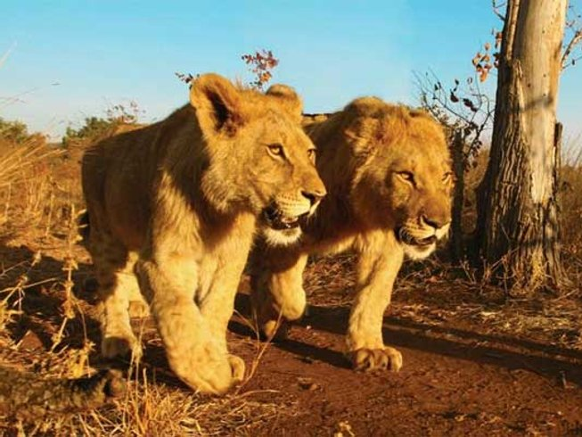 28 Days Exciting Conservation Safari in South Africa