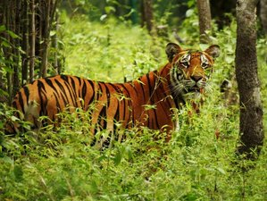 4 Day Amazing Safari in Bardia National Park, Bardiya