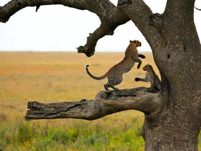 7 Days Kenya Safari in Amboseli, Maasai Mara, Hell's Gate, Lake Naivasha & Lake Nakuru