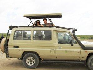 3 Days Thrilling Safari in the Ngorongoro Crater, Tanzania