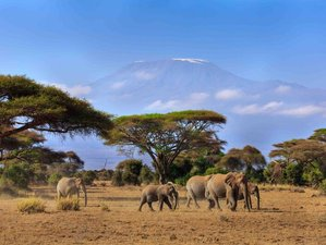 4 Days Special Offer Safari in Tsavo and Amboseli National Park, Kenya