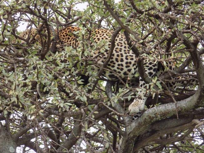 7 Days Maasai Mara, Lake Nakuru, Lake Naivasha, & Amboseli Safari in Kenya