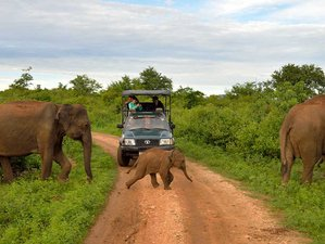 2 Days Adventure Safari in Udawalawa National Park, Sri Lanka