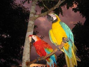 5 Day Birdwatching and Wildlife Tour in Pacaya Samiria National Reserve, Loreto