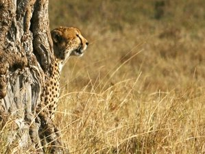 5 Days Lake Nakuru, Hell's Gate, Masai Mara Adventure Safari
