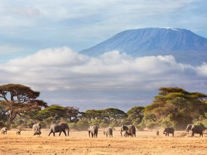 8 Days Breathtaking Kilimanjaro Safari in Tanzania