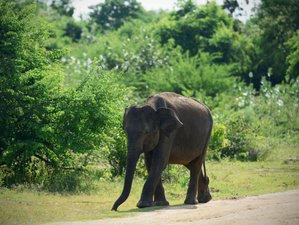3 Day Udawalawe National Park Safari in Uva Province