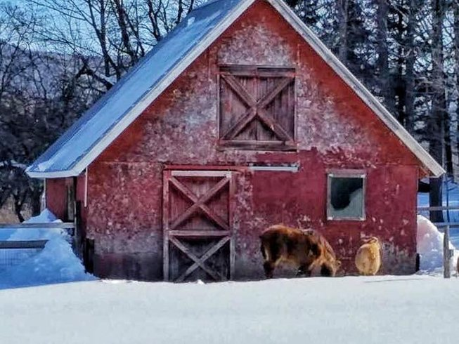 3 Tage Winter Yoga Retreat in Vermont, USA