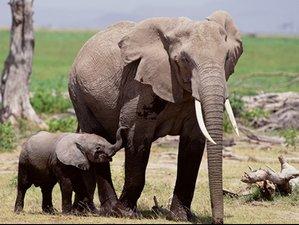 2 Days Short Yet Unforgettable Safari in Tarangire and Ngorongoro Crater, Tanzania