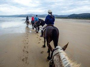 3 Days Incredible Horse Riding Holiday Tasmania, Australia