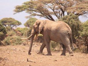 4 Days Amboseli and Tsavo East and West Safari Adventure in Kenya