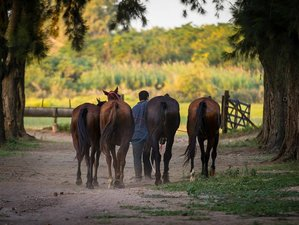 3 Day Wonderful Polo and Horse Riding Escapade in Zelaya, Buenos Aires