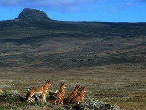 5 Day Wonderful Safari in Bale Mountains National Park