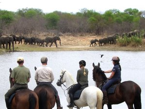 8 Days Big Five Horseriding Safari South Africa