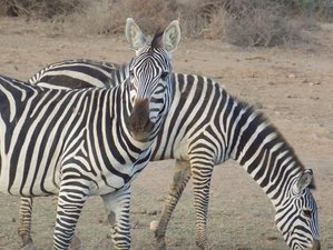 5 Days Affordable Wildlife Safari in Kenya