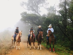 7 Day Hacienda and Cloud Forest Adventure Horse Riding Holiday in Montes de Oro, Puntarenas
