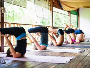 14 Days Detox and Yoga Retreat in Koh Phangan, Thailand