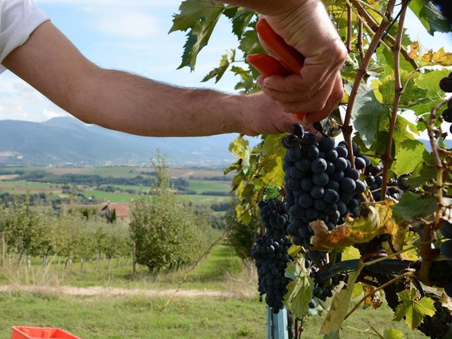 8 Days Food and Wine Holidays in Italy