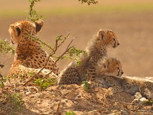 5 Days All Inclusive Big Five Safari in Kenya