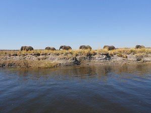 11 Days Moremi Game Reserve Safari in Botswana