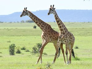 13 Days Classic Luxury and Thrilling Safari in Kenya, Tanzania, and Zanzibar