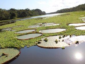 4 Day Jungle Adventure and Wildlife Tour in Pacaya Samiria National Reserve, Loreto