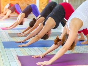 21 Days 200-Hours Special Offer Packages, Ashtanga Teacher Training Course in Rishikesh, India