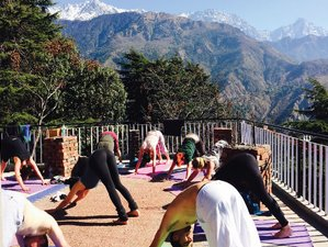 8 Days Yoga Retreat in Dharamsala, India