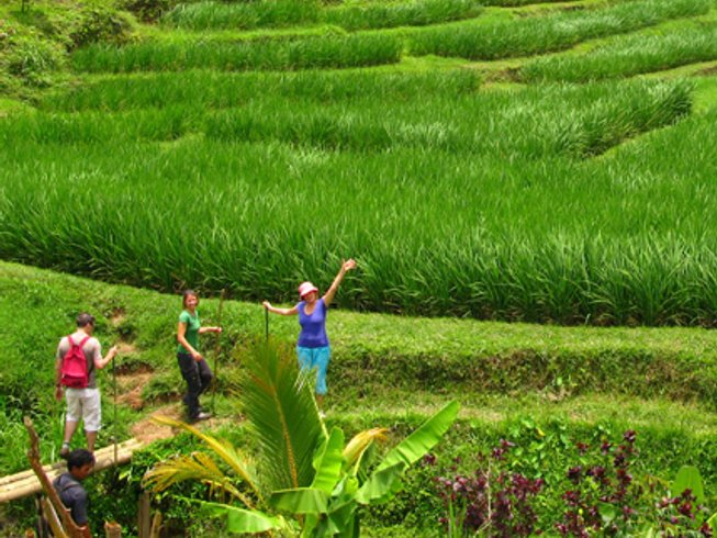 5 Days Trekking and Yoga Retreat in Bali, Indonesia