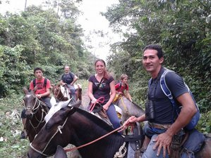 3 Day Wildlife Safari in Tenorio Volcano National Park, Alajuela