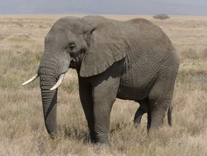 3 Days Private Short Safari to Top National Parks in Northern Tanzania