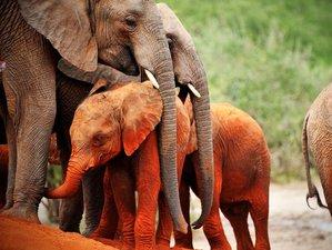 3 Days Wildlife Safari in Samburu National Reserve
