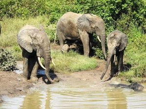 4-Daagse Avontuurlijke Wildlife Safari in Mole National Park
