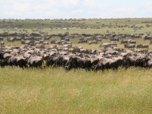 5 Days Private Migration Safari in Northern Tanzania Exploring Tarangire, Serengeti, and Ngorongoro