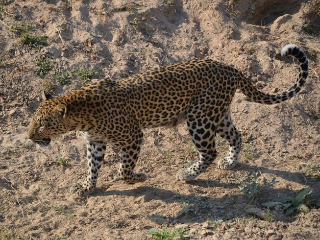 7 Days African Walking Safaris in Zambia