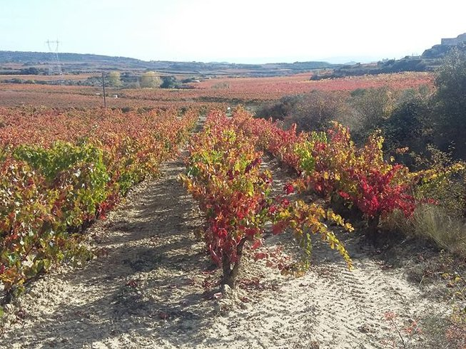 6 Days Spain Wine Vacations