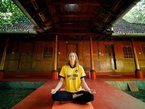 29 días profesorado de yoga avanzado de 300 horas en Kerala, India