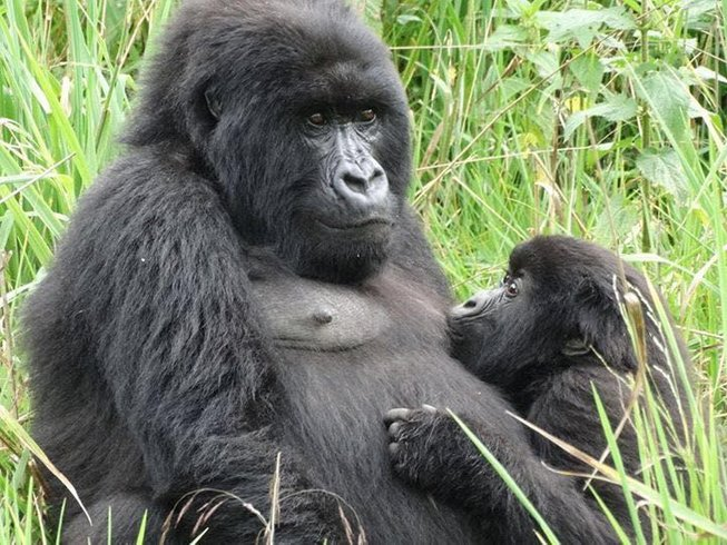 13 Days Game Viewing and Golden Monkey Safari in Uganda