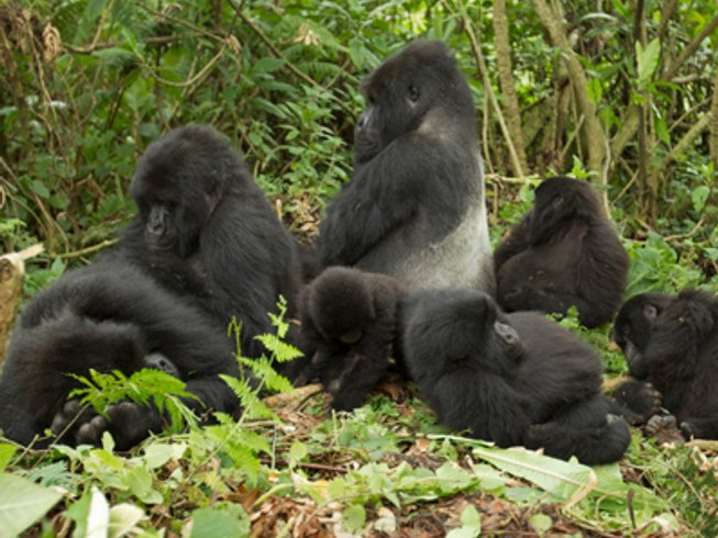 3 Days Gorilla Safari in Uganda